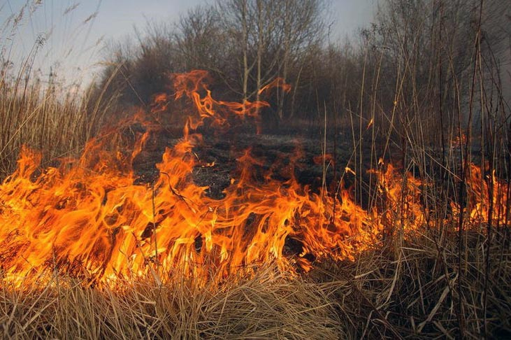 Горят леса. Новости Днепра