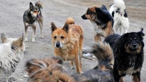 В Днепре бродячие собаки бросаются на людей. Новости Днепра