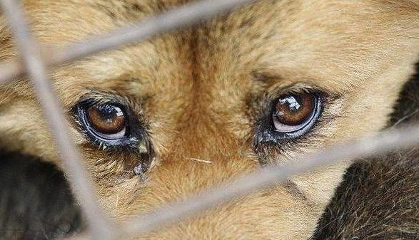 Под Днепром собаку привязали к дорожному знаку и бросили умирать на холоде. Новости Днепра