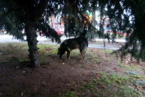 Спасли собаку. Новости Днепра