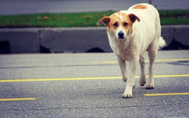 Минутка доброты: в Днепре собака учит людей правильно переходить дорогу. Новости Днепра