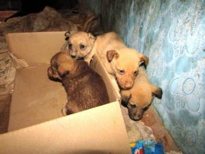 Спасатели достали щенков из ловушки. Новости Днепра
