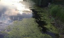 На поверхности воды: в овраге нашли труп мужчины