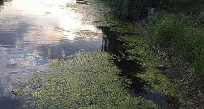 На поверхности воды: в овраге нашли труп мужчины. Новости Днепра