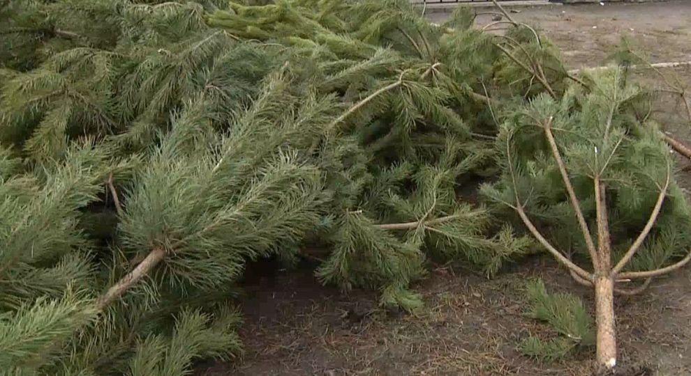 «Спрос падает»: итоги продажи елок в области. Новости Днепра
