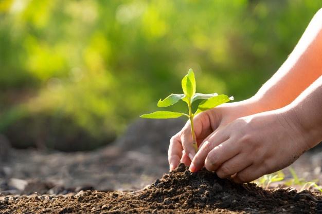 Днепрянин раздает бесплатно семена дерева, которое хорошо очищает воздух. Новости Днепра