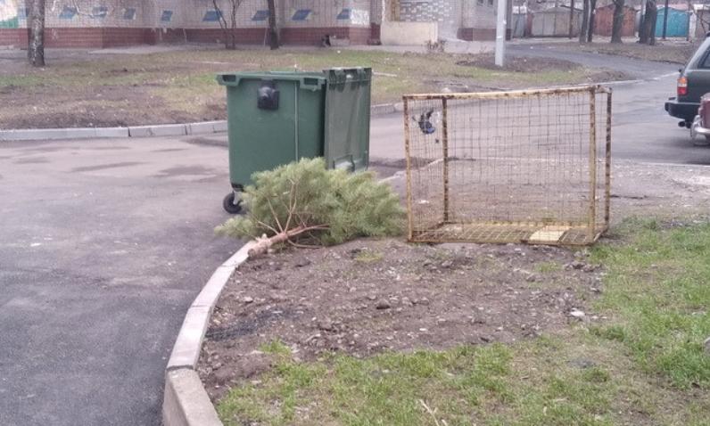 Люди выбрасывают новгодние елки. Новости Днепра