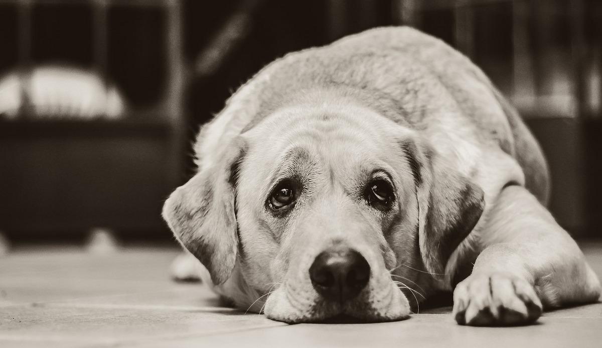 Провалилась в колодец: в Днепре спасали собаку. Новости Днепра