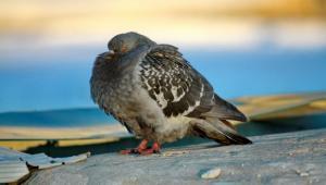 Спасли голубя из ловушки. Новости Днепра