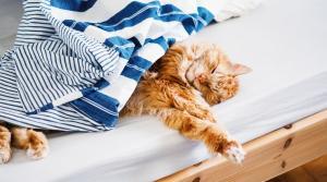 Открыта вакансия обнимателя котов. Новости Украины