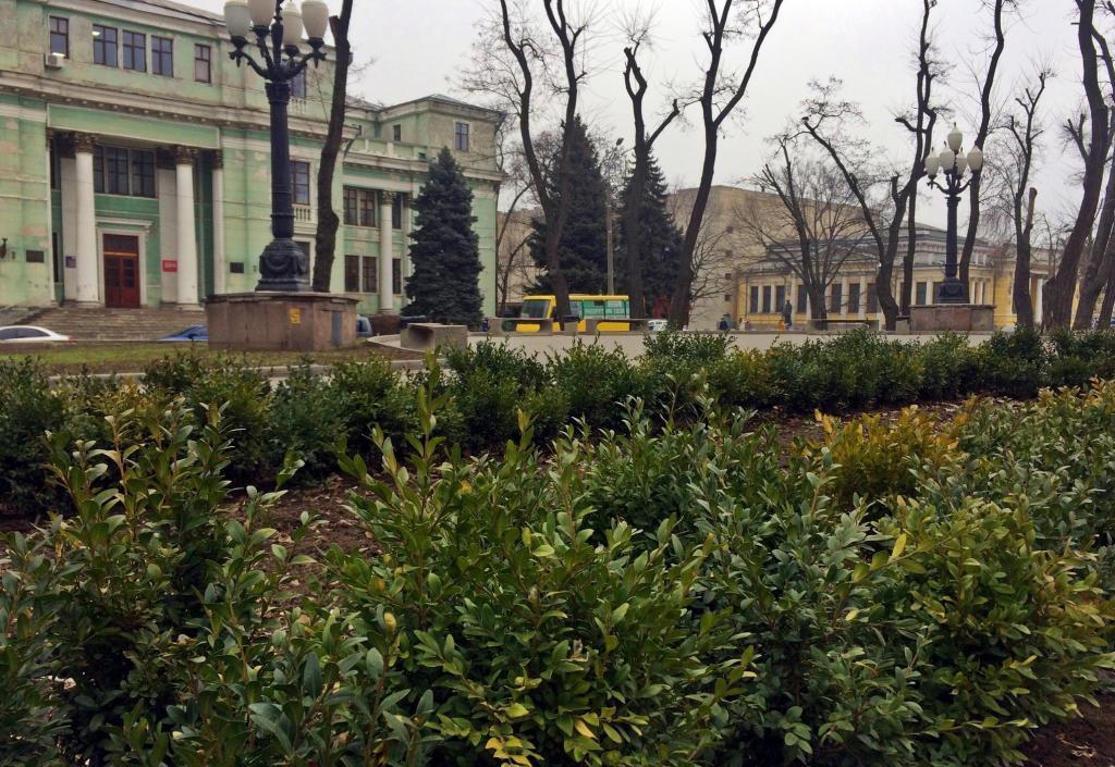 «Зеленый город»: в Днепре высадили многолетние растения. Новости Днепра