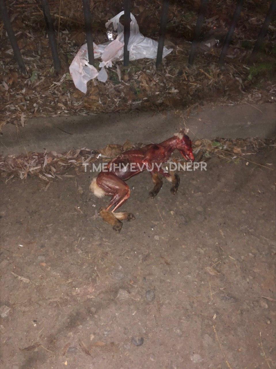 «Максимальная жестокость»: в Днепре с собаки содрали кожу и выбросили посреди улицы. Новости Днепра
