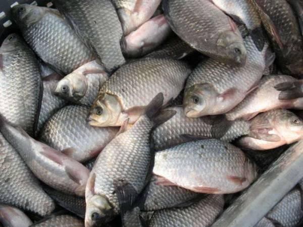 Браконьеры незаконно ловили рыбу. Новости Днепра