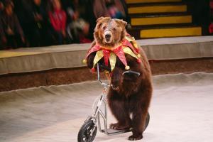 Государственные цирки откажутся от выступлений с животными. Новости Украины