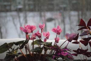 Зимой расцвели цветы. Новости Днепра
