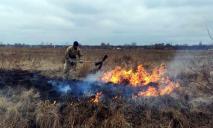 «Слишком теплая зима»: в области горел сухой камыш и трава