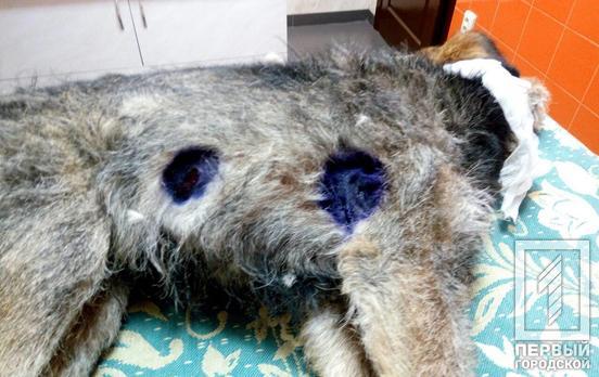 Полицейский жестоко поиздевался над собакой. Новости Днепра
