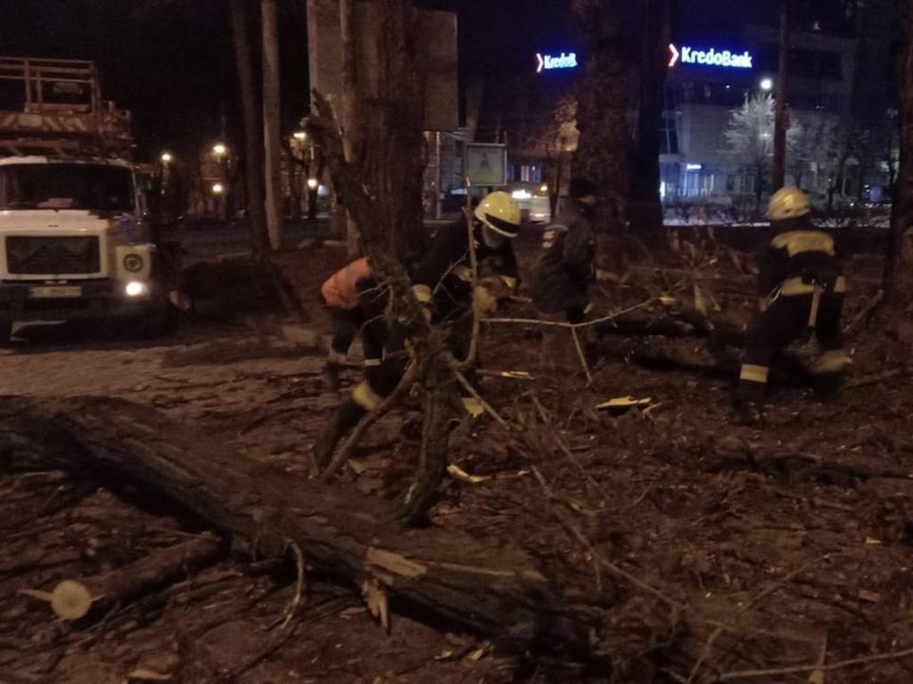 В Днепре дерево упало на маршрутку. Новости Днепра