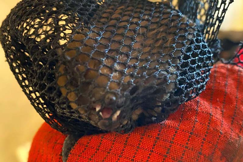 Непрошенный гость: летучая мышь напугала днепрян в их же квартире. Новости Днепра