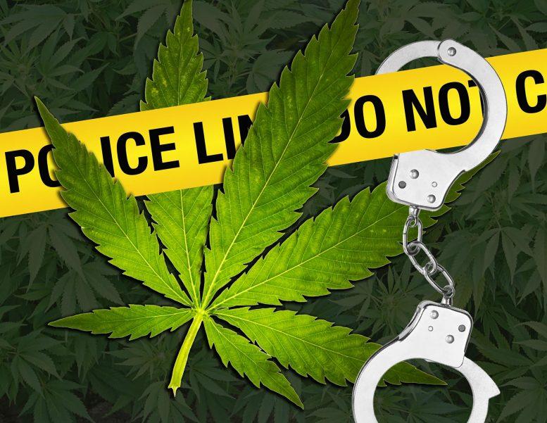В Днепре мужчина спокойно хранил у себя дома марихуану на 2 миллиона гривен. Новости Днепра