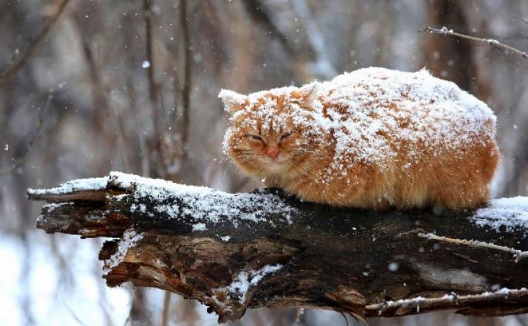 Облака и мокрый снег: погода в Днепре в эти выходные. Новости Днепра