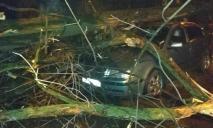 Поваленные деревья и поврежденные авто: последствия непогоды в Днепре и области