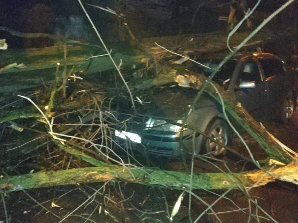 Поваленные деревья и поврежденные авто: последствия непогоды в Днепре и области. Новости Днепра