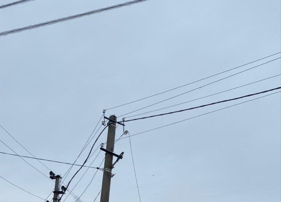 Обрыв проводов из-за непогоды: трех собак убило током. Новости Днепра