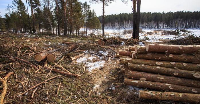 Днепряне просят спасти лес на одном из жилмассивов. Новости Днепра