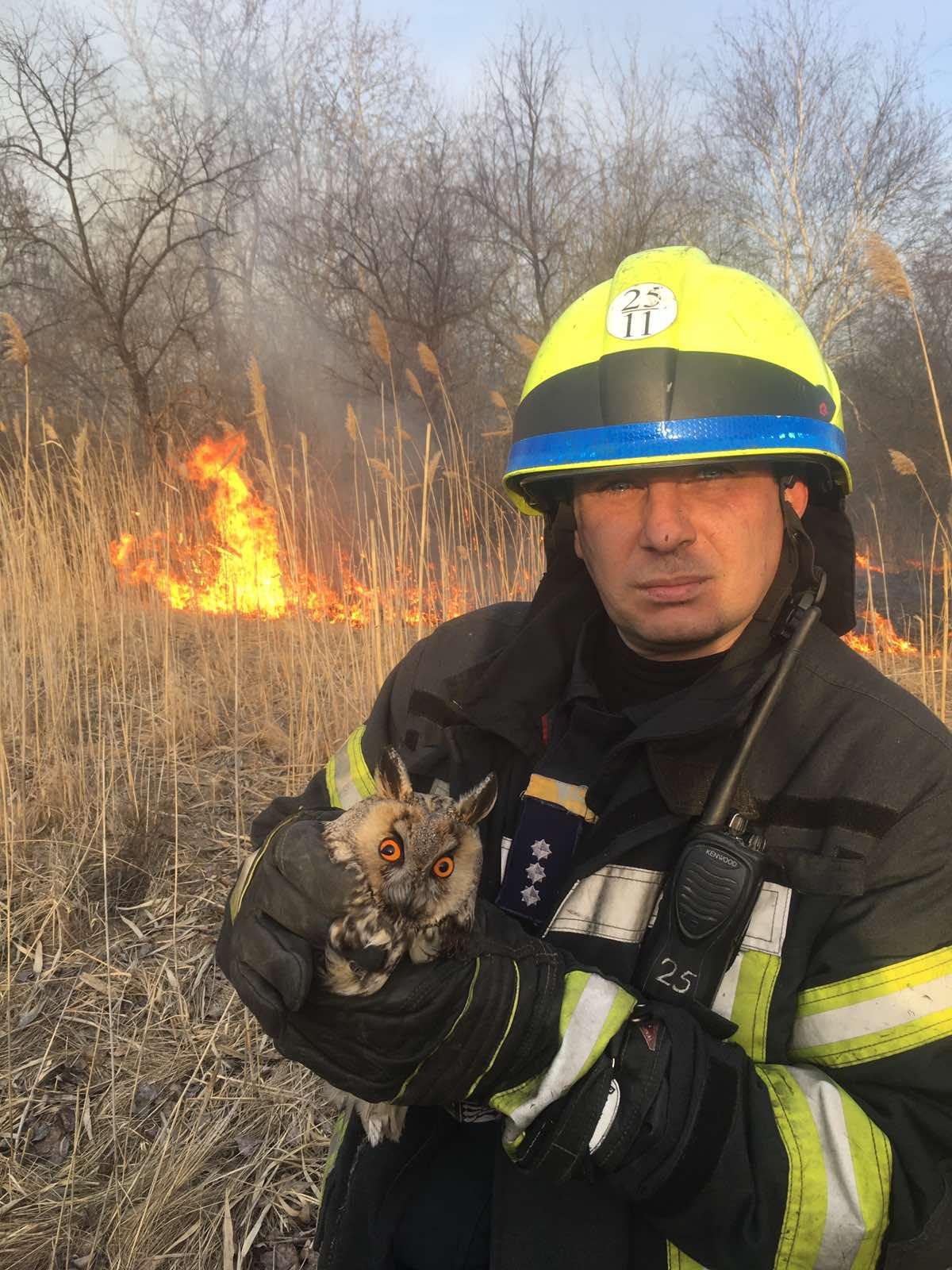 Пожар в Днепре: спасатели вытащили из огня сову. Новости Днепра