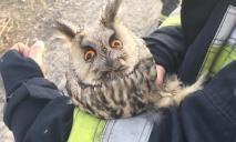 Пожар в Днепре: спасатели вытащили из огня сову