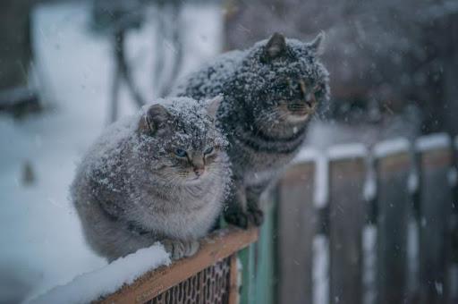 Мокрый снег еще не ушел: погода на 28-е февраля. Новости Днепра