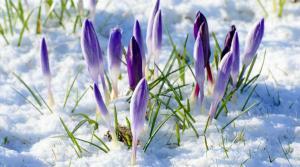 СТало известно, когда наступит весна. Новости Днепра