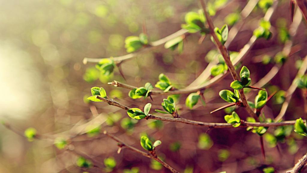 25-е марта: праздники и приметы этого дня