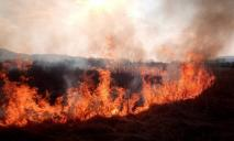 В Чернобыльской зоне горит лес: пожар тушат спасатели