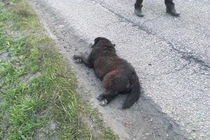 В ДТП погибла собака. Новости Днепра