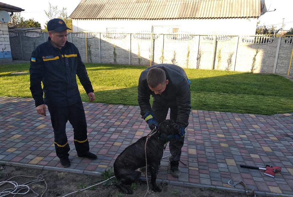 В Подгородном пес провалился в глубокий колодец. Новости Днепра