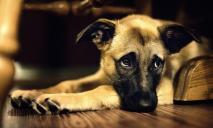 В Днепре к окну квартиры пенсионерки привязали мертвую собаку
