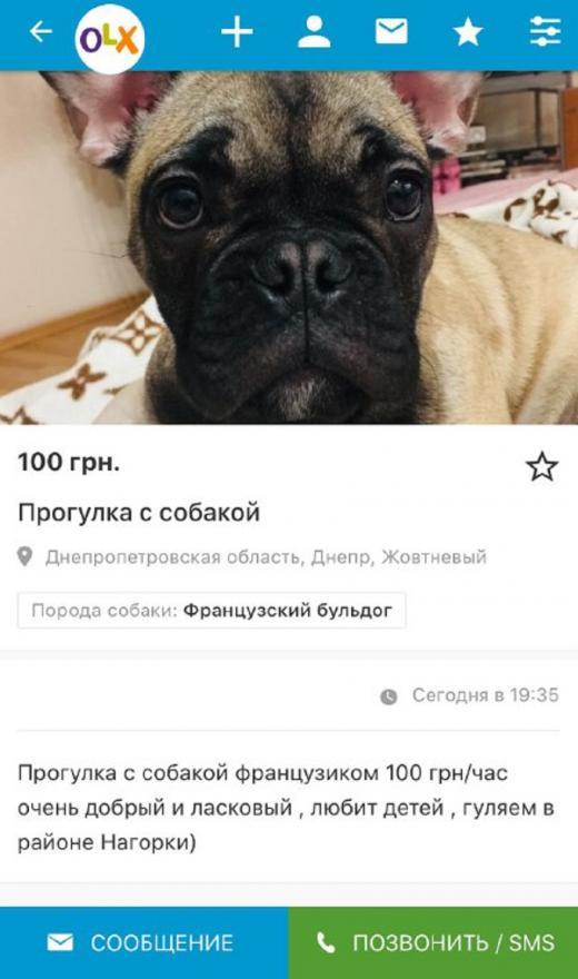 «Не роскошь, а средство передвижения»: в Днепре собак сдают в аренду для прогулок. Новости Днепра