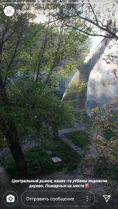 Подпалили дерево. Новости Днепра
