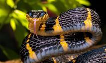 В Днепре мужчина со змеей в руках сидел возле жилой многоэтажки: подробности