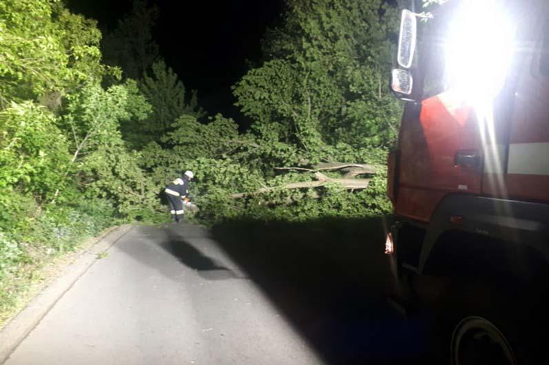 Спасатели убирают завалы деревьев. Новости Днепра