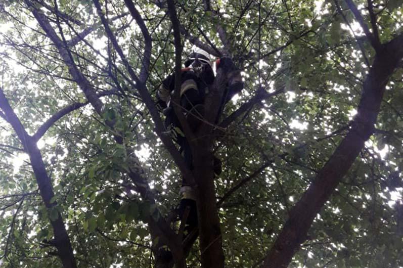В Днепре спасатели сняли кота с дерева. Новости Днепра