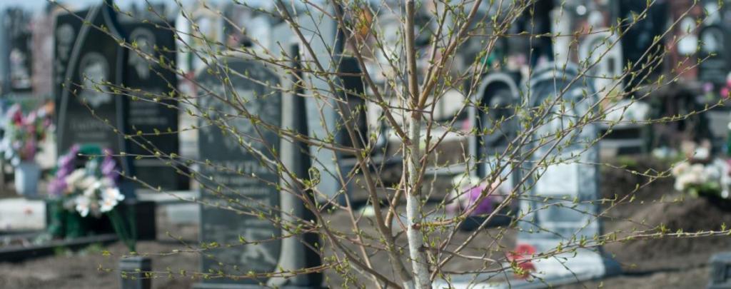 Мародеры на кладбище. Новости Днепра