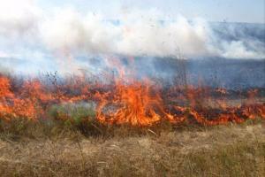 Спасатели Днепроптерощины обратились к жителям Днепра и области с просьбой не сжигать сухую растительность, а также беречь окружающую среду. Новости Днепра