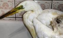 «Предстоит ампутация»: в Днепре спасают подстреленную птицу