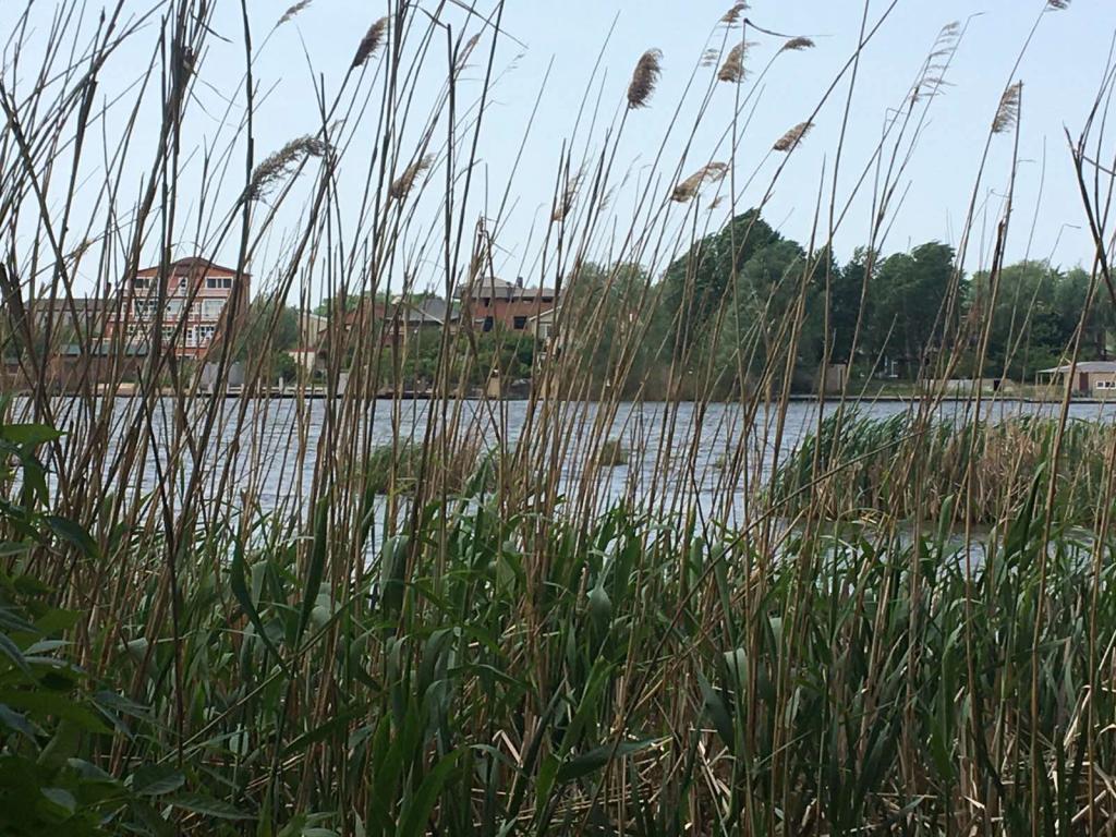 Экологическая катастрофа на жилмассиве Приднепровск в Днепре. Новости Днепра