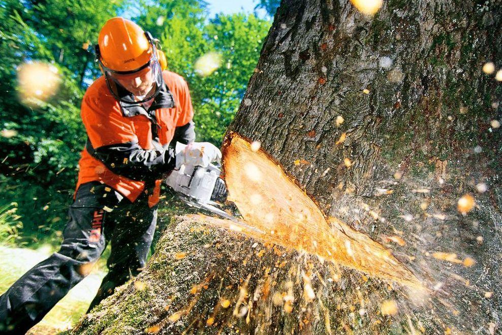 В Днепре хотят убрать около 400 деревьев и кустов. Новости Днепра