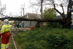 Дерево заблокировало работу трамвая. Новости Днепра