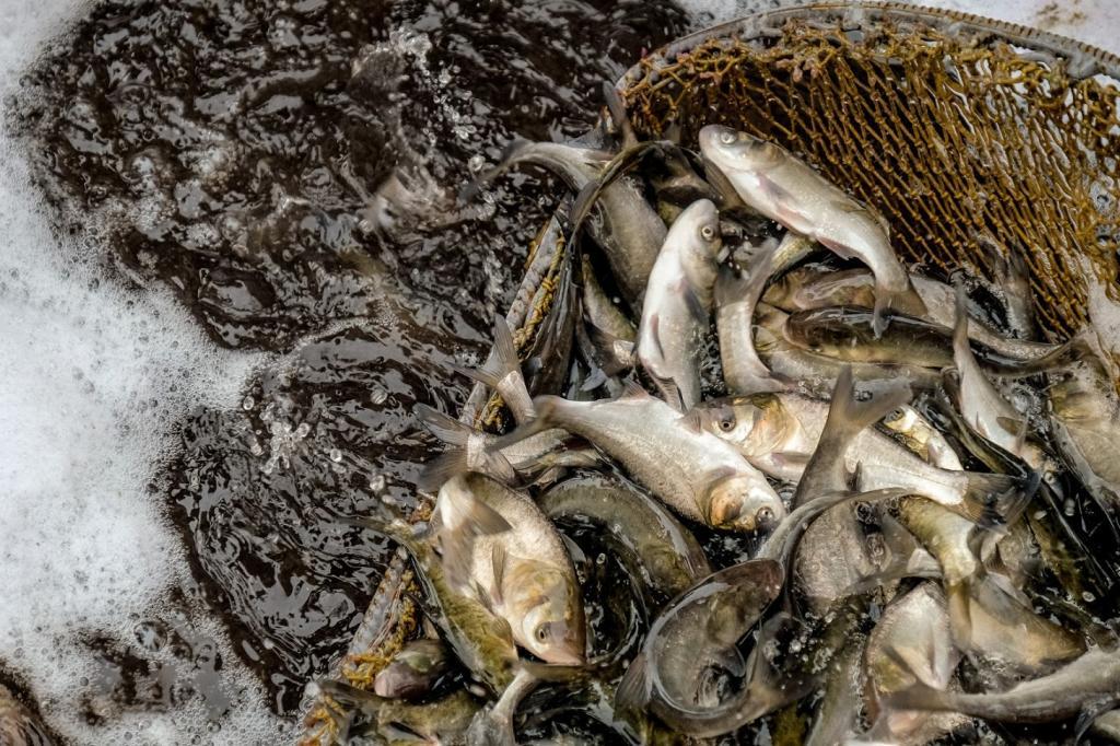 Незаконный улов рыбы. Новости Днепра